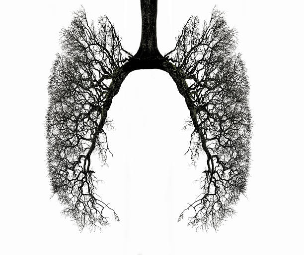 Lungs Filled With Cement.
