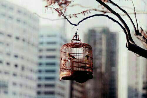 Caged Birds.