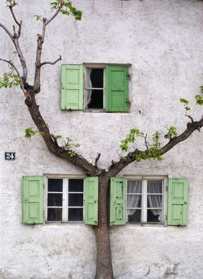 Source: https://weheartit.com/entry/285197968?context_page=5&context_query=old+tree+photography&context_type=search