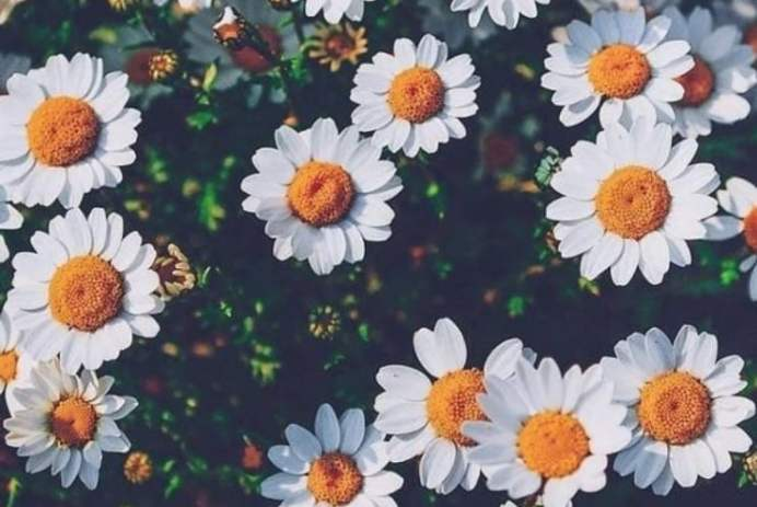 Source: https://weheartit.com/entry/325108424?context_page=2&context_query=daisy+photography&context_type=search
