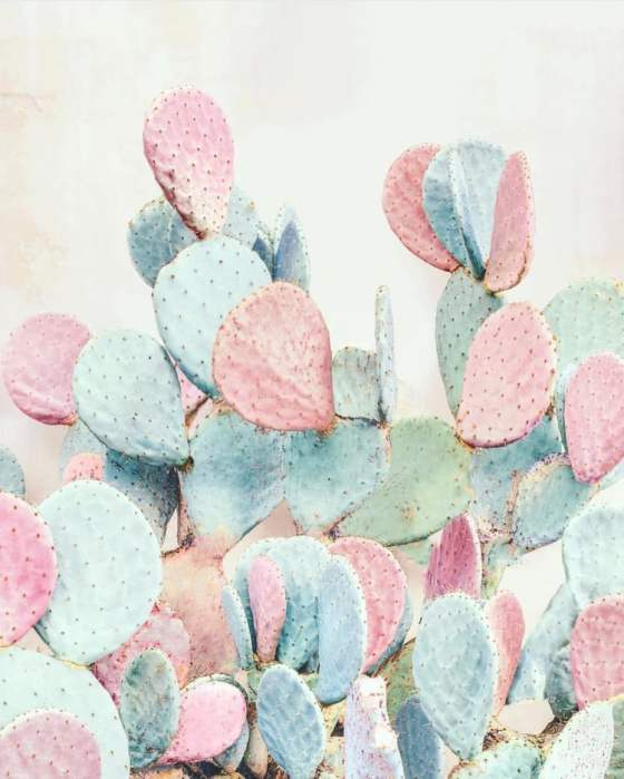 Source: https://weheartit.com/entry/324210606?context_page=5&context_query=cactus+photography&context_type=search