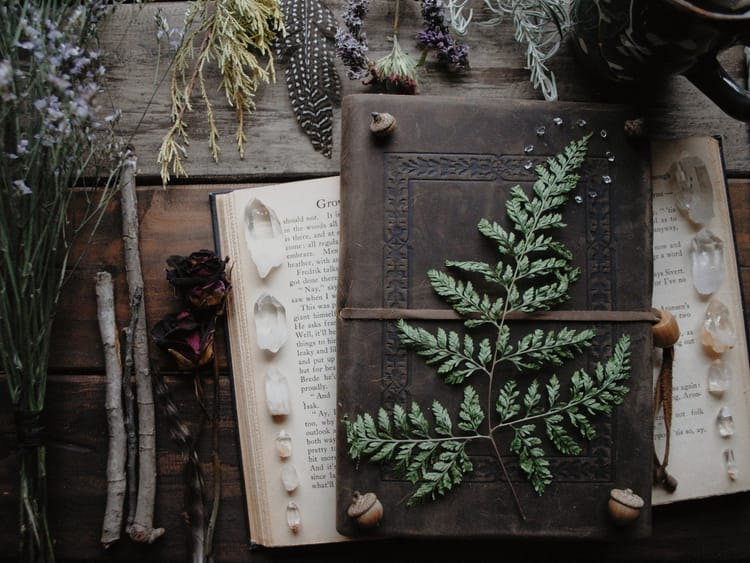 : https://weheartit.com/entry/308643052?context_page=2&context_query=fern+photography&context_type=search