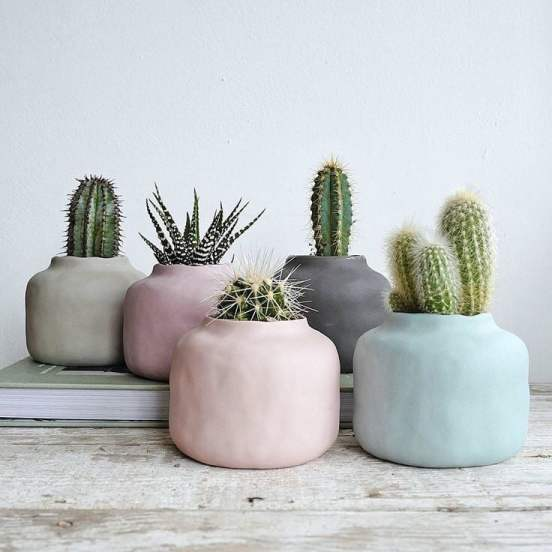 Source: https://weheartit.com/entry/314965498?context_page=5&context_query=succulent+photography&context_type=search