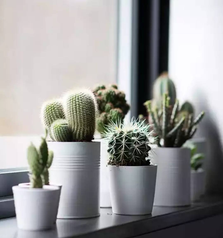 Source: https://weheartit.com/entry/328122304?context_page=2&context_query=cactus&context_type=search