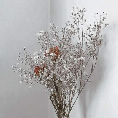 Source: https://weheartit.com/entry/329085661?context_page=3&context_query=white+flowers&context_type=search