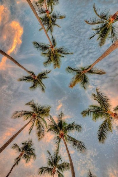 Source: https://weheartit.com/entry/329590138?context_page=2&context_query=palm+tree&context_type=search