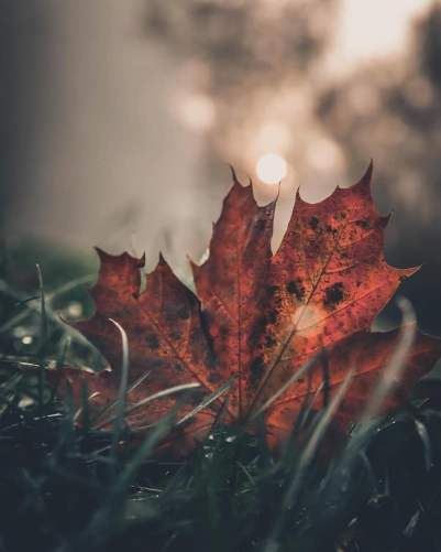 Source: https://weheartit.com/entry/320906357?context_page=13&context_query=leaf+photography&context_type=search