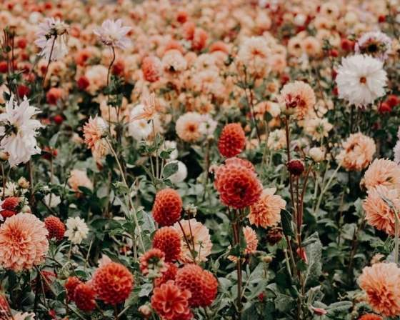 Source: https://weheartit.com/entry/325434554?context_page=4&context_query=flower+fields+photography&context_type=search