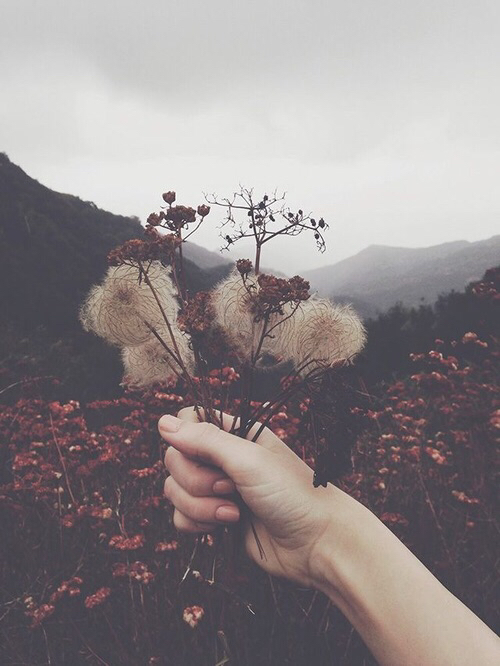 Source: https://weheartit.com/entry/146410596?context_page=2&context_query=bouquet+mountains&context_type=search