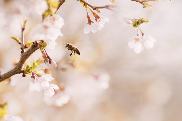 Source: https://weheartit.com/entry/324425647?context_page=4&context_query=bee+photography&context_type=search