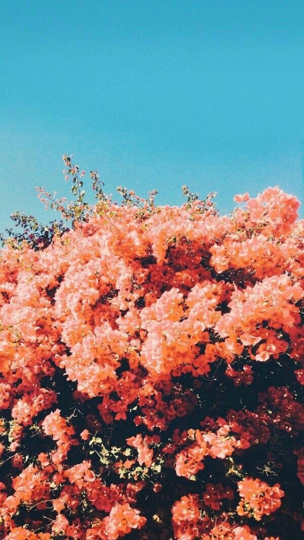 Source: https://weheartit.com/entry/332746420?context_query=flower+sky+photography&context_type=search