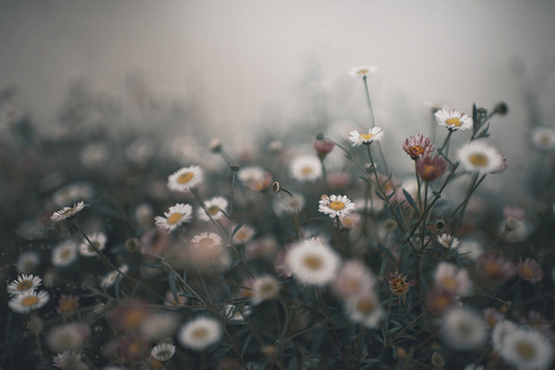 Suorce: https://weheartit.com/entry/303871281?context_page=25&context_query=flower+sky+photo&context_type=search