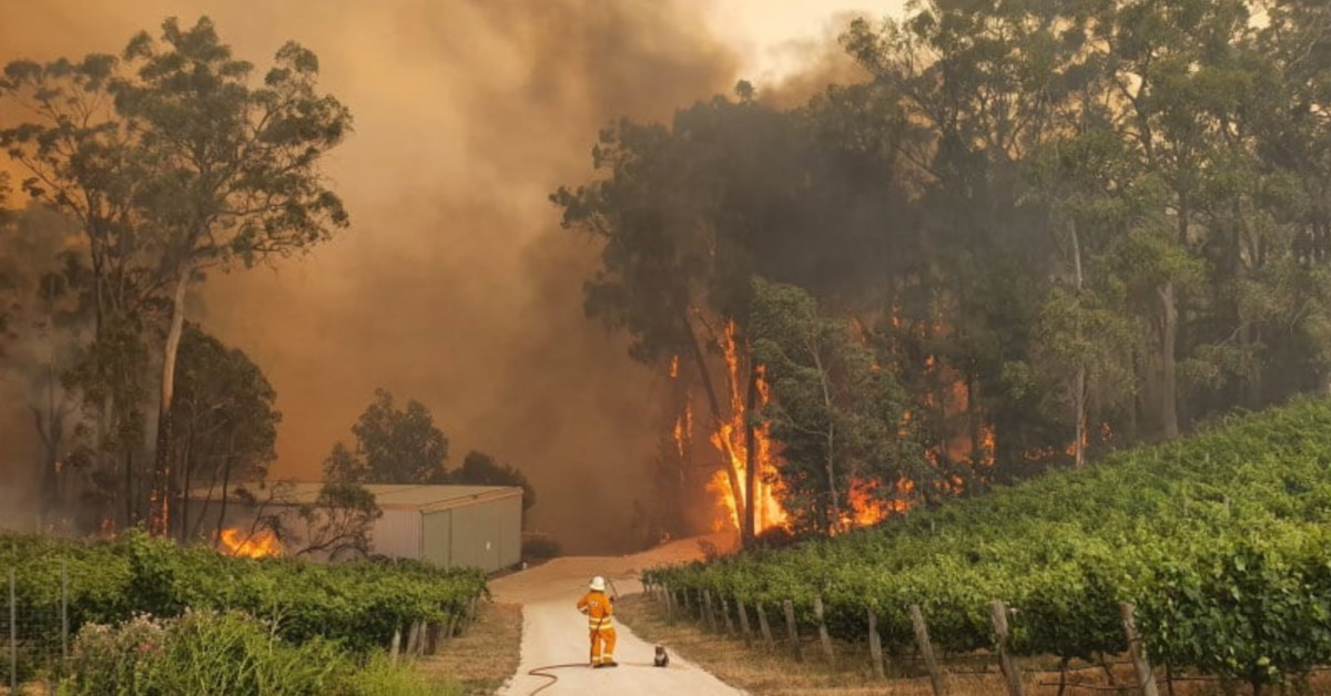 Source: https://www.gizmodo.com.au/2019/12/photo-of-koala-and-firefighter-surrounded-by-flames-perfectly-captures-the-climate-emergency/
